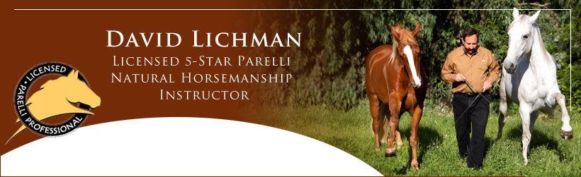David Lichman Licensed 5-Star Parelli Natural Horsemanship Instructor